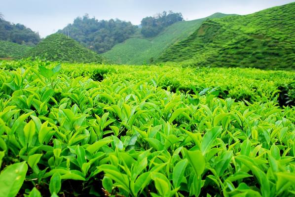 Цейлонский чай.