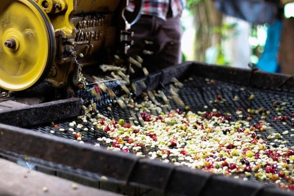 Способы обработки кофе и их отличия